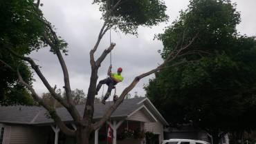 Arboricutlure Services